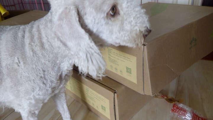 贵芬 (GRIFFIN )G19 全犬种全犬期火鸡超低敏轻泪痕美毛配方天然粮0.5kg 晒单图