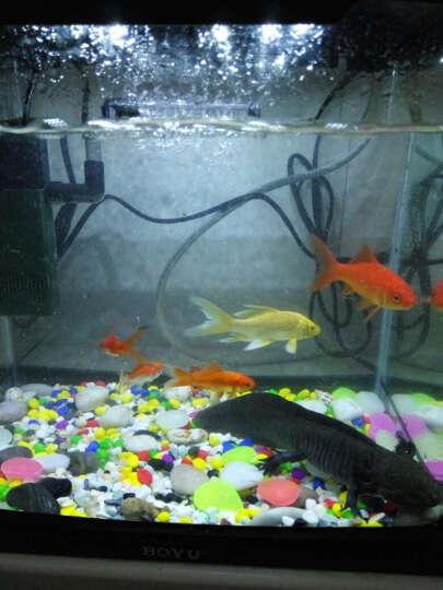 鱼缸造景底砂水族箱天然装饰布景石头乌龟缸造景用品 白玉石小粒300g 晒单图