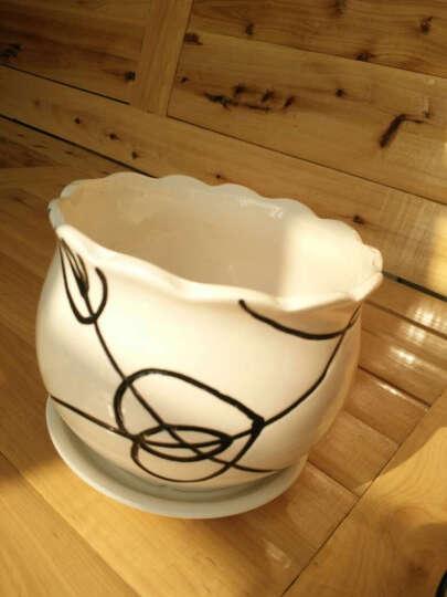 春天来了 特大号陶瓷花盆 白瓷漂亮花盆花瓶花盘带托盘 大小全 适合盆栽塑料花盆 花开富贵 大 晒单图