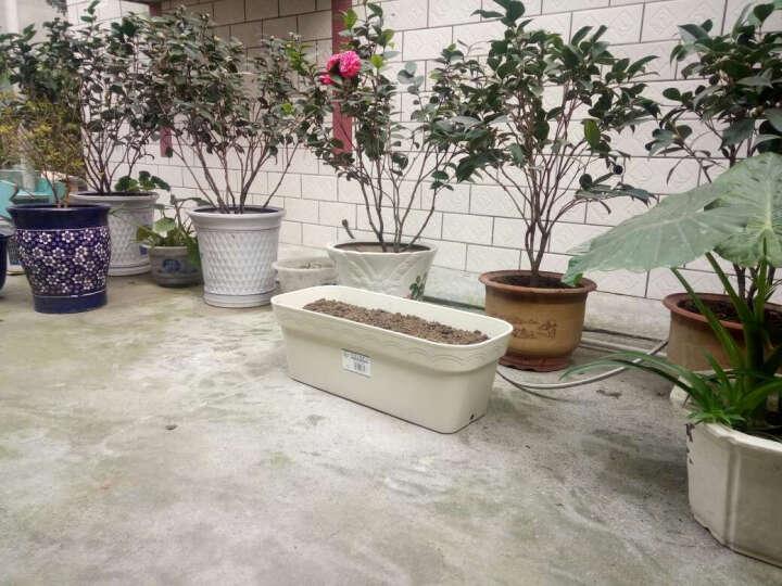 爱丽思加厚树脂塑料特大号花盆阳台花园种菜盆长方形种植箱无需托盘自带堵水塞子 白色 晒单图