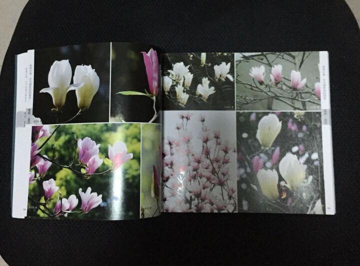 画家必备:花鸟摄影资料图库 晒单图
