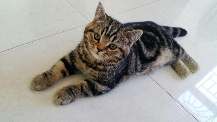 伟嘉 (Whiskas)宠物 成猫猫粮海洋鱼味 3.6kg套装(3.6KG/袋+京东来点1个) 一键购买 晒单图