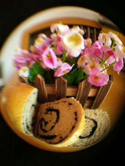 寿海完全法 全麦面包粉中高筋全麦面粉900g 天山麦源含麦麸皮胚芽 吐司粉 晒单图