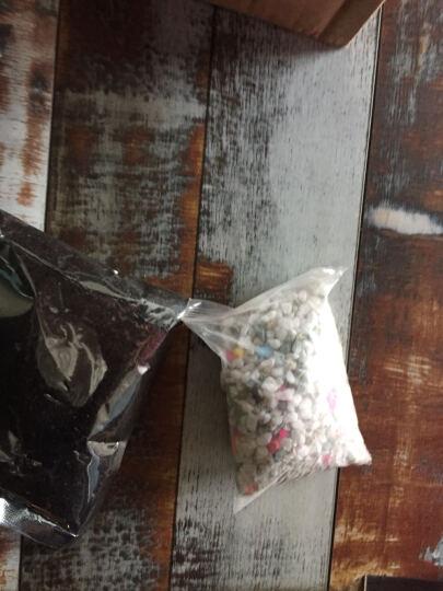 花景天|赠盆赠土 多肉植物组合盆栽肉肉植物室内盆景微景观吉娃娃静夜红宝石多个品种选择 熊童子 4-6片叶子 晒单图