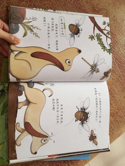 我的日记系列蝉的日记精装幼儿童绘本故事图画书昆虫记日记自然科普百科绘本适合3-4-5-6岁 晒单图