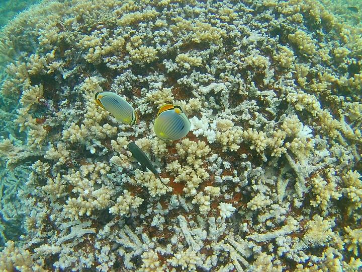 史历克 7500S运动相机4K智能摄像机双屏WIFI防水30米户外航拍潜水骑行防抖山狗智能摄像机 黄色 晒单图