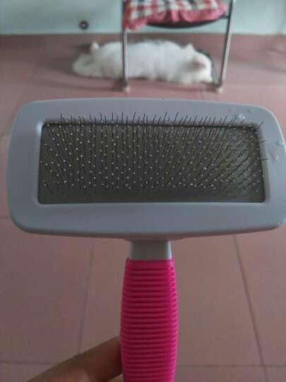 咪贝萌 宠物狗狗梳子 猫狗毛刷子 洗澡清洁用品 猫咪泰迪金毛拉布拉多犬梳毛美容用具 大号 红绿随机 晒单图