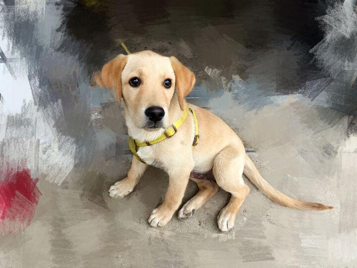 尼鲁狗粮 幼犬拉布拉多狗粮 宠物天然狗粮 2.5kg 晒单图
