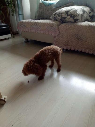狗狗零食宠物磨牙棒泰迪金毛幼犬训犬零食食品 零食大礼包500g 晒单图