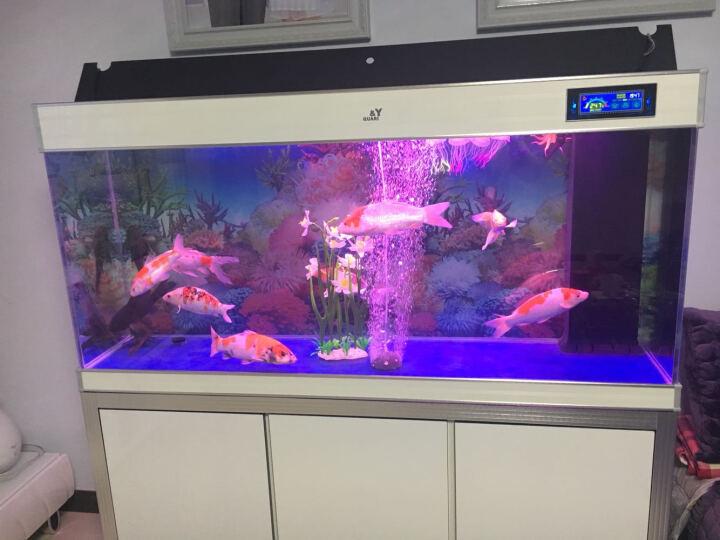 【支持上门安装】嘉洋超白玻璃鱼缸客厅生态水族箱大型超白玻璃龙鱼缸底部过滤长方形屏风鱼缸生态水族箱 金边+白 底过滤1米长*40cm宽*80cm缸体高 晒单图