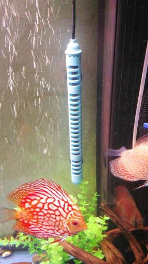 DEERA加热棒鱼缸 水族箱加温棒 自动恒温离水断电 加热棒防爆智能 纳米加热500w适合60-80cm缸 蓝色 晒单图