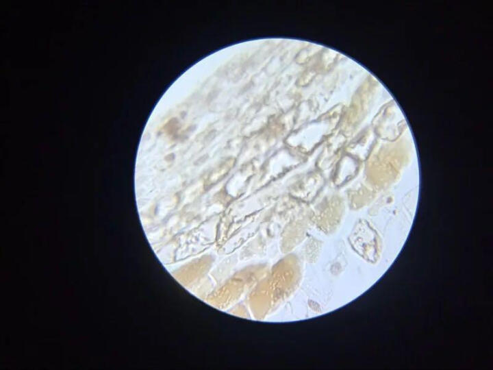 美佳朗(MCALON) 生物显微镜MCL-1600专业儿童学生高倍高清畜牧养殖可接电脑 出厂标配+20礼品+7.0寸屏 晒单图