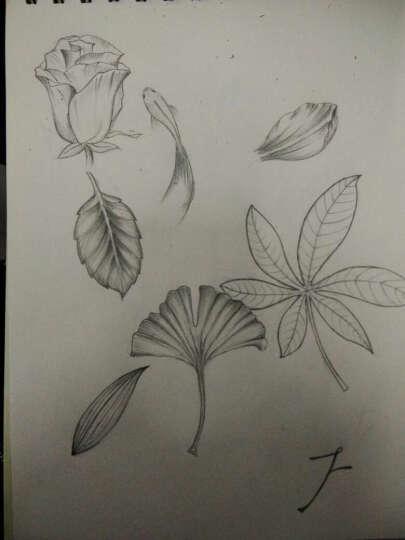 花未央 铅笔素描唯美花之绘 晒单图