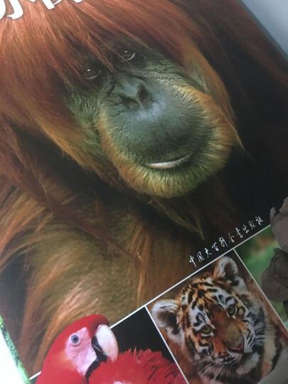 dk儿童动物百科全书(第2版)很有意思的一本书