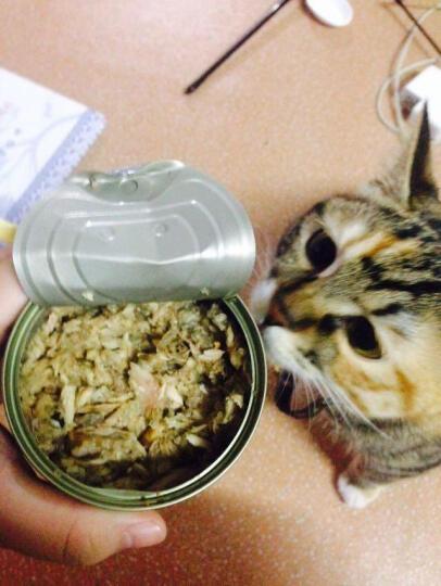 TOM CAT宠物猫罐头猫零食  成猫幼猫汤汁罐头 猫湿粮170g* 猫罐头猫咪零食 红色 混合口味 晒单图