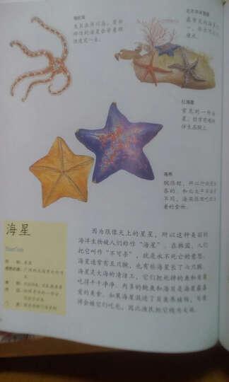 水边的自然课 神秘的海洋生物 晒单图