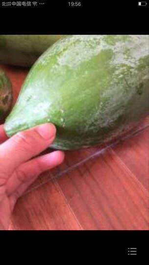 木瓜切面图画图