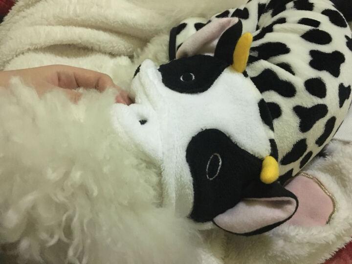 狗狗衣服泰迪变身装可爱棉衣四脚衣比熊犬
