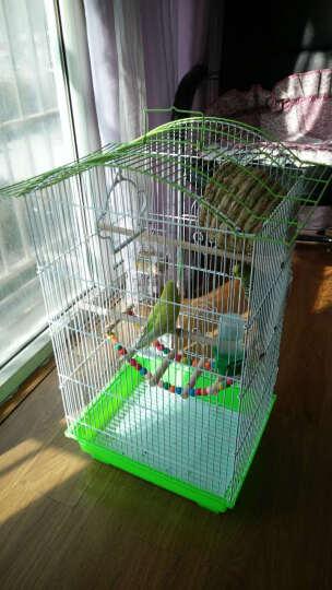 GOLOVE画眉八哥虎皮鹦鹉鸟笼子 金属能折叠拆卸别墅鸟笼 草绿色 笼子+塑料房子+云梯 晒单图