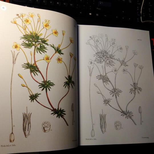 英国皇家植物园植物图谱1 显花植物 晒单图
