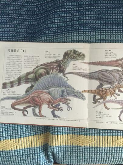 世纪绘本花园 恐龙大逃亡 晒单图