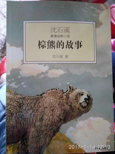 沈石溪激情动物小说:棕熊的故事 12-16岁 沈石溪 著  悦悦图书 晒单图