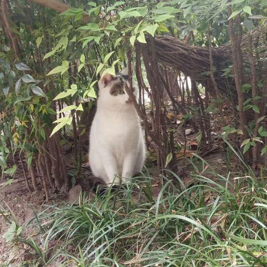 诗瑞 幼猫成猫猫粮 天然 室内成猫粮5kg 晒单图