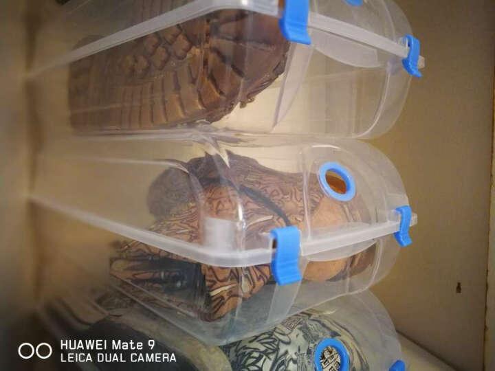 耐奔 10只装 透明鞋盒翻盖式 加厚塑料鞋盒收纳鞋子收纳盒鞋盒子整理盒收纳箱 蓝色扣 10个装 晒单图