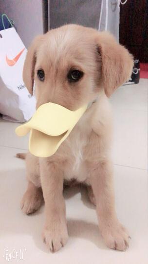 dogstory 宠物狗狗止吠器 鸭嘴套 硅胶材质 黄色 S+ 晒单图