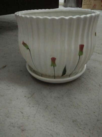 北园湖白色欧式花盆陶瓷带托盘批发大号个性桌面多肉