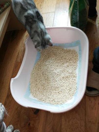 越帝(yuedi) 植物豆腐猫砂 猫沙包邮无尘原味豆腐沙 强吸水除臭结团 6升 绿茶 晒单图