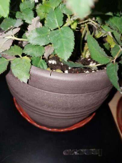 沃施(worth) 通用型营养基质5L/袋 养花种菜绿萝花卉多肉营养土 种植土培养土有机土 园艺用品 晒单图
