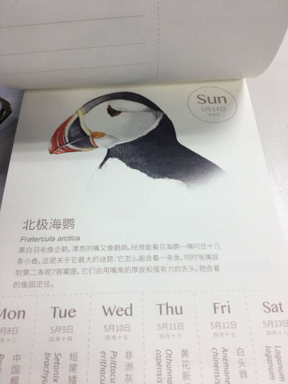 物种日历(紫色) 晒单图