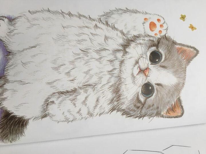 呆萌小动物画起来绘森活色铅笔画彩铅画自学入门基础教程喵星人小兔