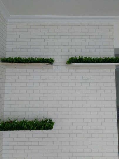 合欢树 定制包设计仿真植物墙尤加利草坪绿化绿植室内绿色立体植物墙壁挂背景墙装饰 简约H款(40*60cm/单片价) 晒单图