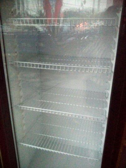 乐创(lecon) 啤酒展示柜冷藏立式冰柜商用冰箱饮料饮品保鲜单门双门三门冷柜水果鲜花点菜 蓝白色单门 直冷 晒单图