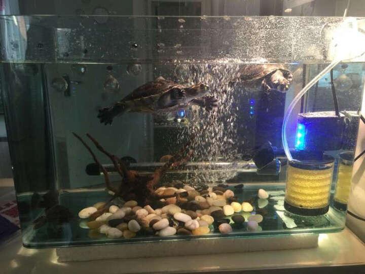 SOBO 鱼缸过滤器三合一内置过滤器鱼缸过滤桶增氧泵 小号20W+滤材+硝化菌胶囊 晒单图