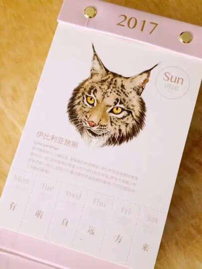 物种日历(马卡龙粉色) 晒单图