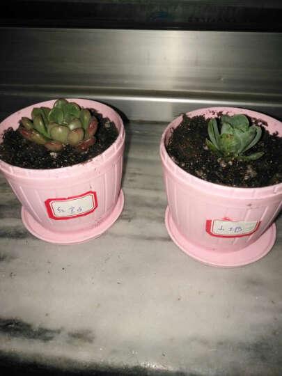 含盆送土肉肉办公桌面盆栽室内花卉植物绿植多肉植物批发 星球3厘米左右 1斤 晒单图