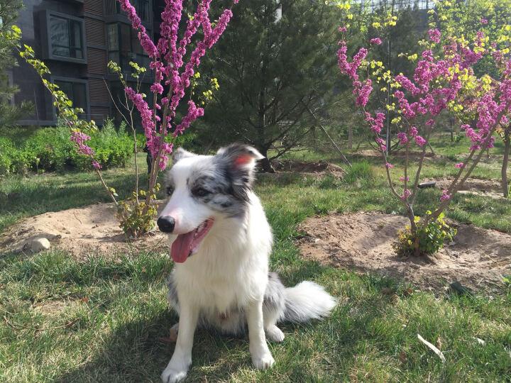 特瑞仕(Trixie)源于德国行动派宠物狗抓挠玩具独处训练玩具-寻宝机 晒单图