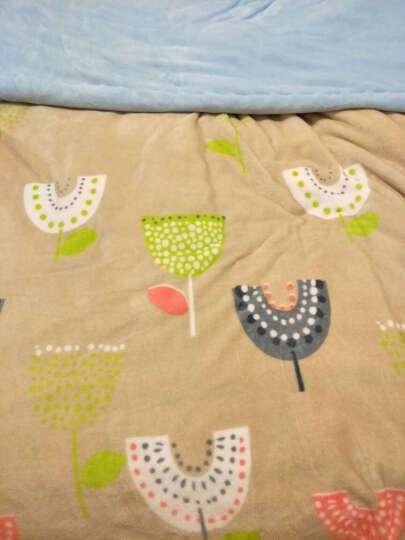 皮尔卡丹 四件套纯棉套件床上用品全棉斜纹印花被罩床单式床品套件 迷迭香 1.5-1.8米床通用(被套200*230cm) 晒单图