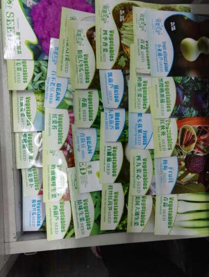 我要发芽 蔬菜种子法国奶油生菜种子生吃超嫩沙拉四季播种 约10克 晒单图
