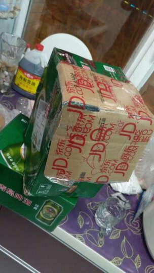 啤酒 青岛啤酒(tsingtao)