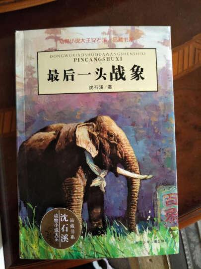 *后一头战象 动物小说大王沈石溪品藏书系 动物小说 中国儿童文学 晒单图