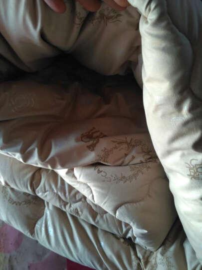 爱斯基摩人家纺被子厚冬被 加厚驼毛被子芯 保暖绒冬被春秋棉被芯 双人单人被子棉花被 单人 150*210cm(秋冬款约5斤) 晒单图