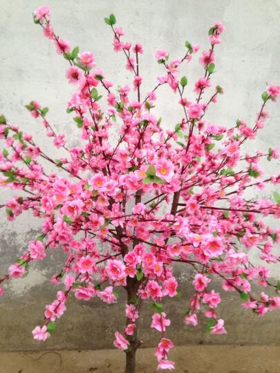 陆地  仿真桃树 仿真樱花树许愿树人造树假桃树仿真造型梅花树 室内造景树场景装饰树 加密 高度2米桃树 晒单图