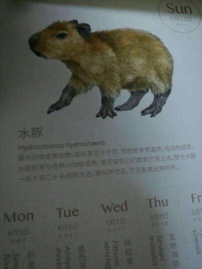 物种日历(马卡龙黄色) 晒单图