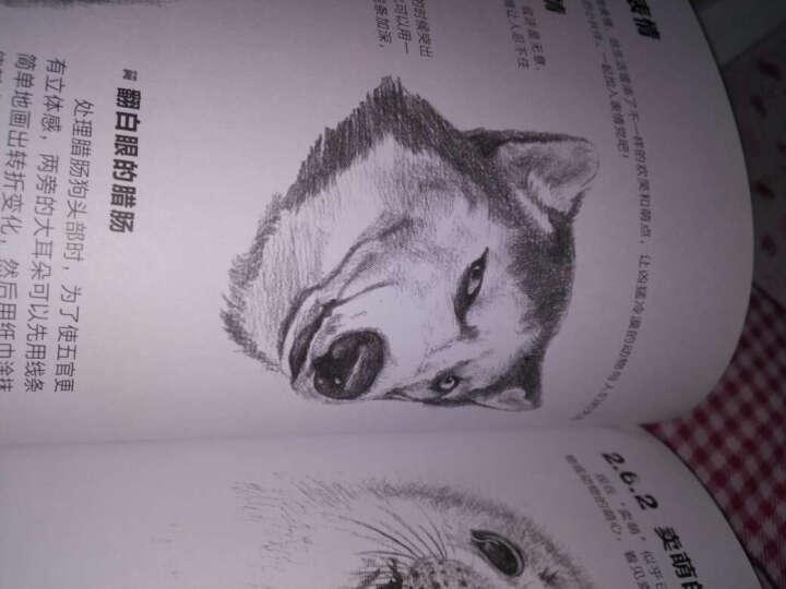 铅笔素描从入门到精通·动物篇 晒单图
