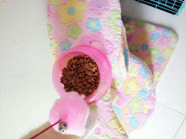 格拉腾(Glutton)猫粮加菲英短折耳淡水鱼幼猫粮鱼肉味1.5kg 晒单图