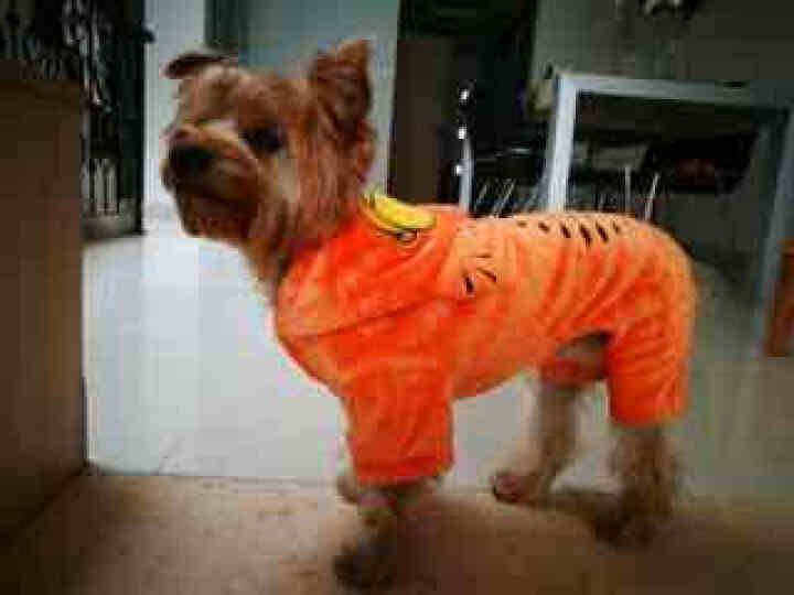 [晒单帖]好可爱的加菲猫狗狗